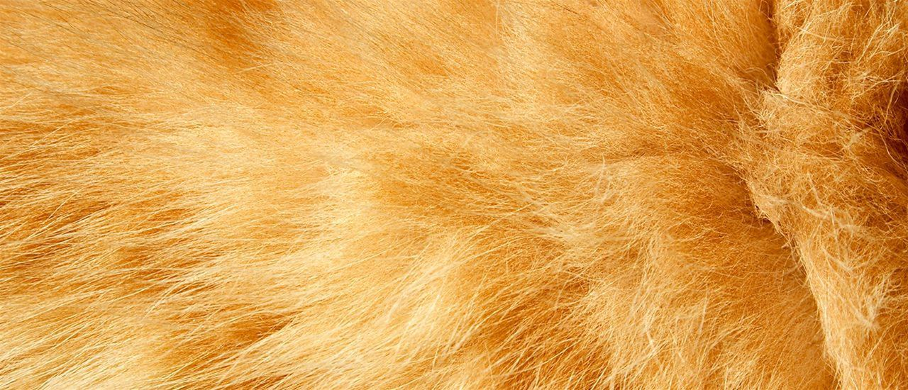 'Fur' or 'Faux'? Test Your Products with BLC